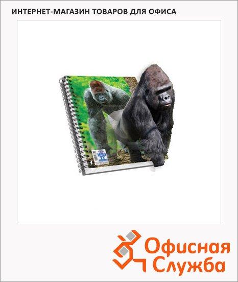 Тетрадь общая Skag 3D горилла, А4, 96 листов, в клетку, ламинированный картон