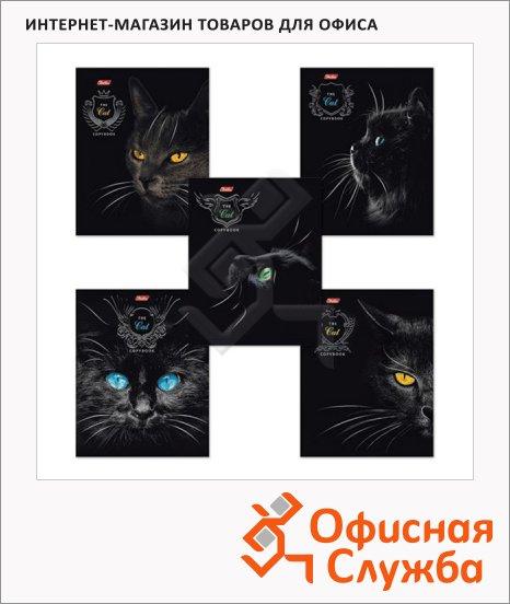 Тетрадь общая Hatber Royal Cats, А5, 48 листов, в клетку, на скрепке, мелованный картон/ лак