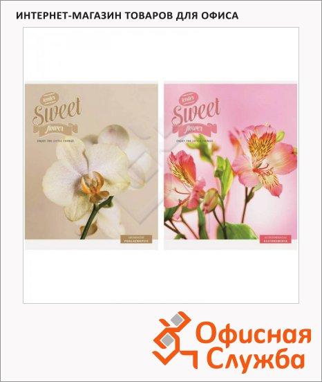 ������� Office Space ����� Sweet flower, �5, 80 ������, � ������, �� �������, �������