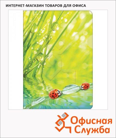 фото: Папка-уголок Berlingo Ladybird А4, 180мкм