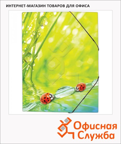 Пластиковая папка на резинке Berlingo Ladybird, А4
