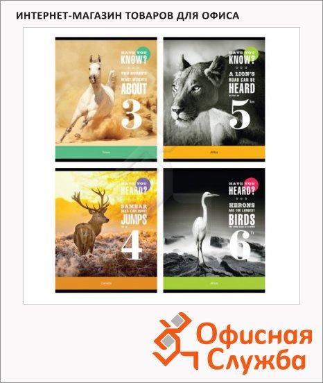 Тетрадь общая Office Space Животные Have you, A5, 48 листов, в линейку, на скрепке, мелованный картон