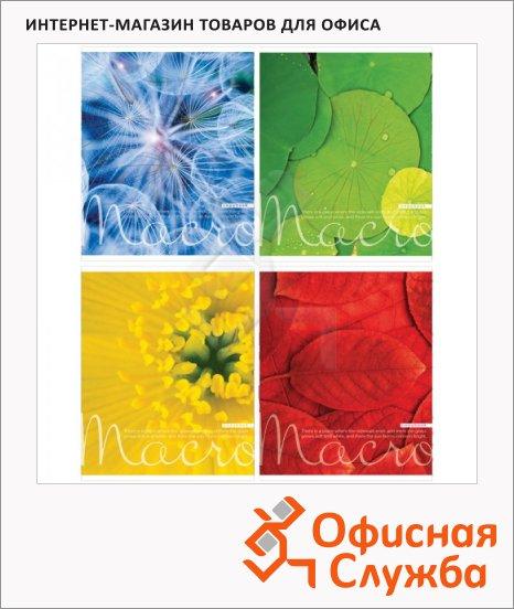 Тетрадь общая Bg Цвета природы, А5, 48 листов, в клетку, на скрепке, мелованный картон