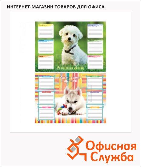 фото: Расписание уроков Собачки А4