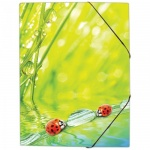Пластиковая папка на резинке Berlingo, А4, Ladybird