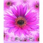 Тетрадь общая Альт Цветочный рай, А5, 48 листов, в клетку, на скрепке, мелованный картон