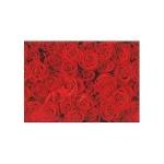 Бумага упаковочная Susy Card Розы, 2х0.7м