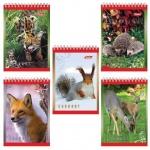 Блокнот Hatber Животные России, А7, 40 листов, в клетку, на спирали, мелованный картон, ассорти